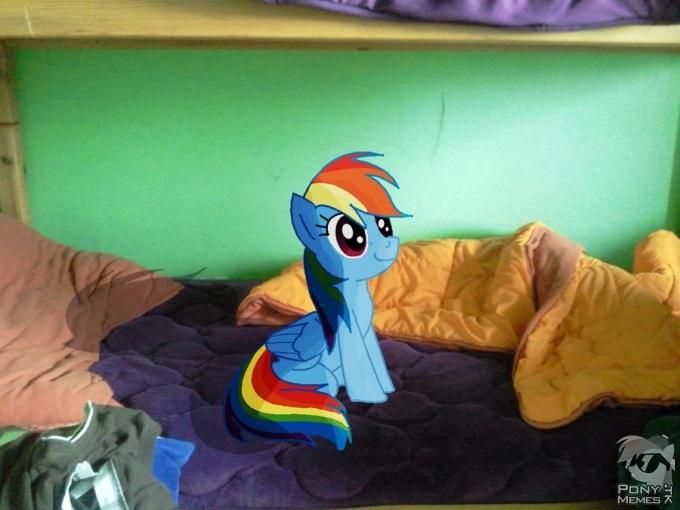 Prawdziwa Rainbow Dash